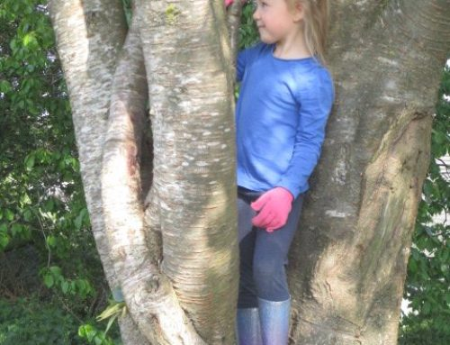 Acorn Class Forest School
