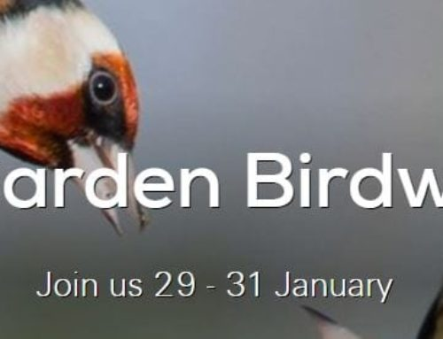 RSPB- Big Garden Birdwatch 2021