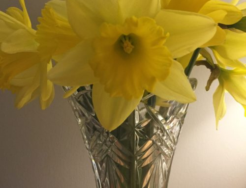 Stilling time 'daffodils of hope'
