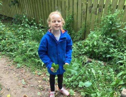 Hazel Class STEM Activity – 3 Little Pigs